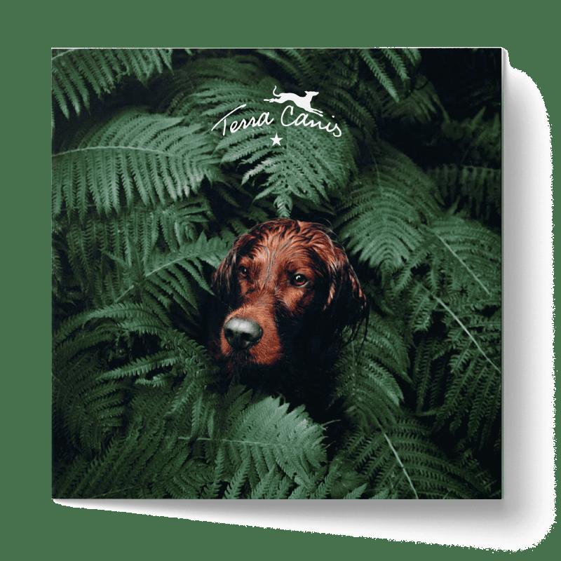 TC Goes Green-Broschüre, englische Version