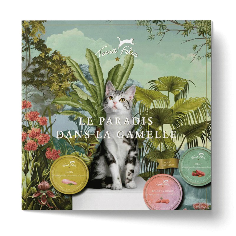 TF Paradise in a cat's bowl-Flyer, french version