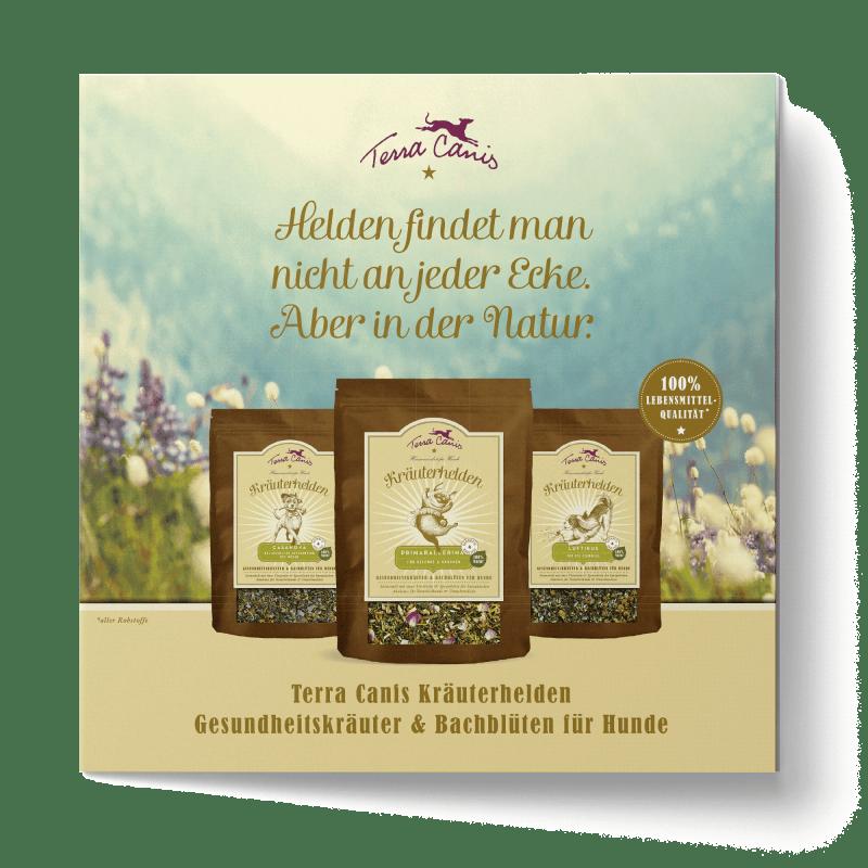 TC Kräuterhelden-Flyer, englische Version