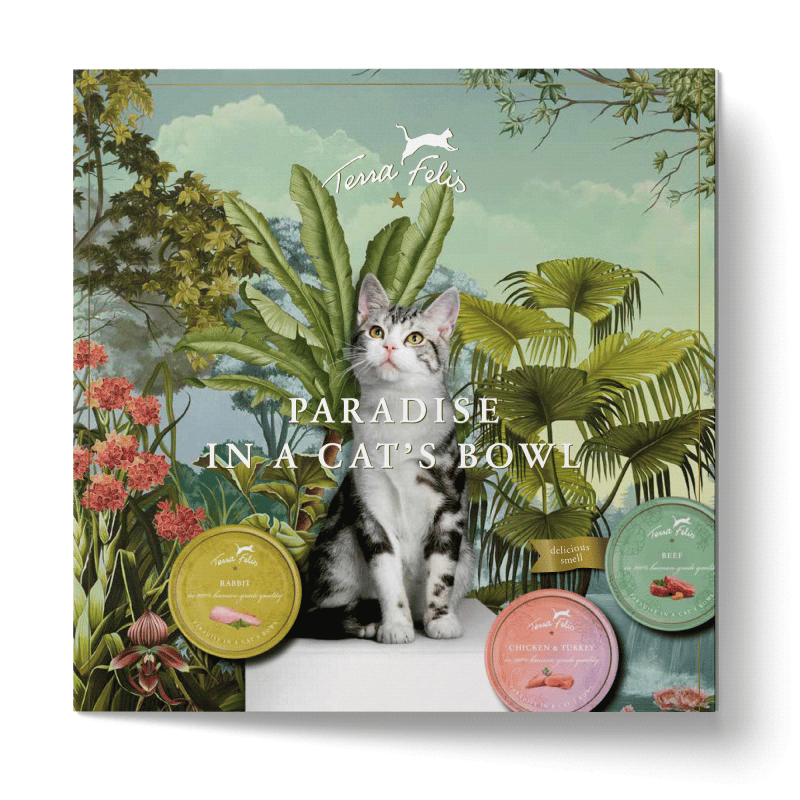 TF Das Paradies im Katzennapf-Flyer, englische Version