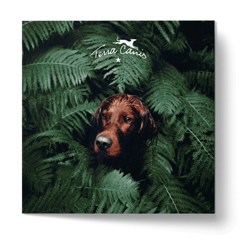 TC Brochure Goes Green, version allemande